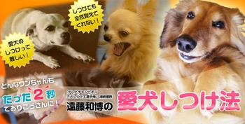 endou_shitsuke.jpg